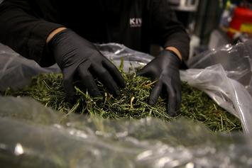 Research Shows Access To Marijuana Decreases Opioid Abuse