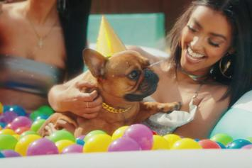"""T-Pain Throws His Dog A Perfect Party In """"It's My Dog Birthday"""" Visual"""