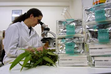 Cannabis Might Be Able To Prevent Coronavirus, New Study Says